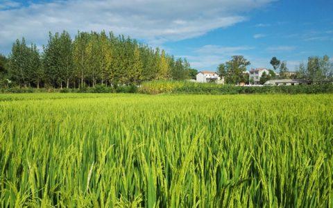 万亩高标农田项目助力铁门岗乡抗旱夺丰收