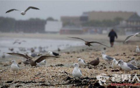 蛤蜊在海滩堆积成山  留下了难闻的气味引发关注