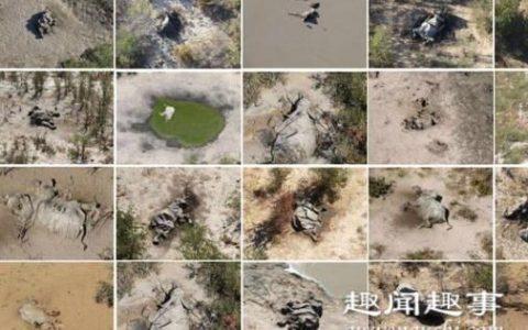 超过350头大象突然集体神秘死亡 生前诡异举动曝光令人震惊真相令人可怕