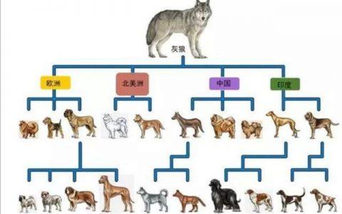 有人说中国的狗这么多,消耗了多少粮食?这对物价产生了什么影响吗?
