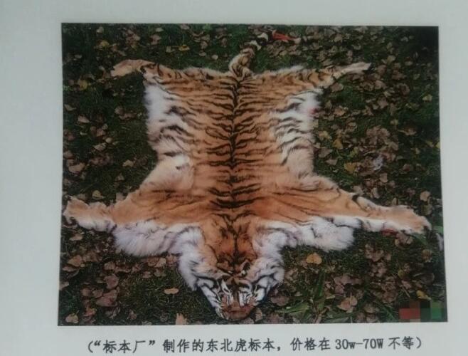 动物保护中心被举报吃虎肉 骨头泡制成虎骨酒